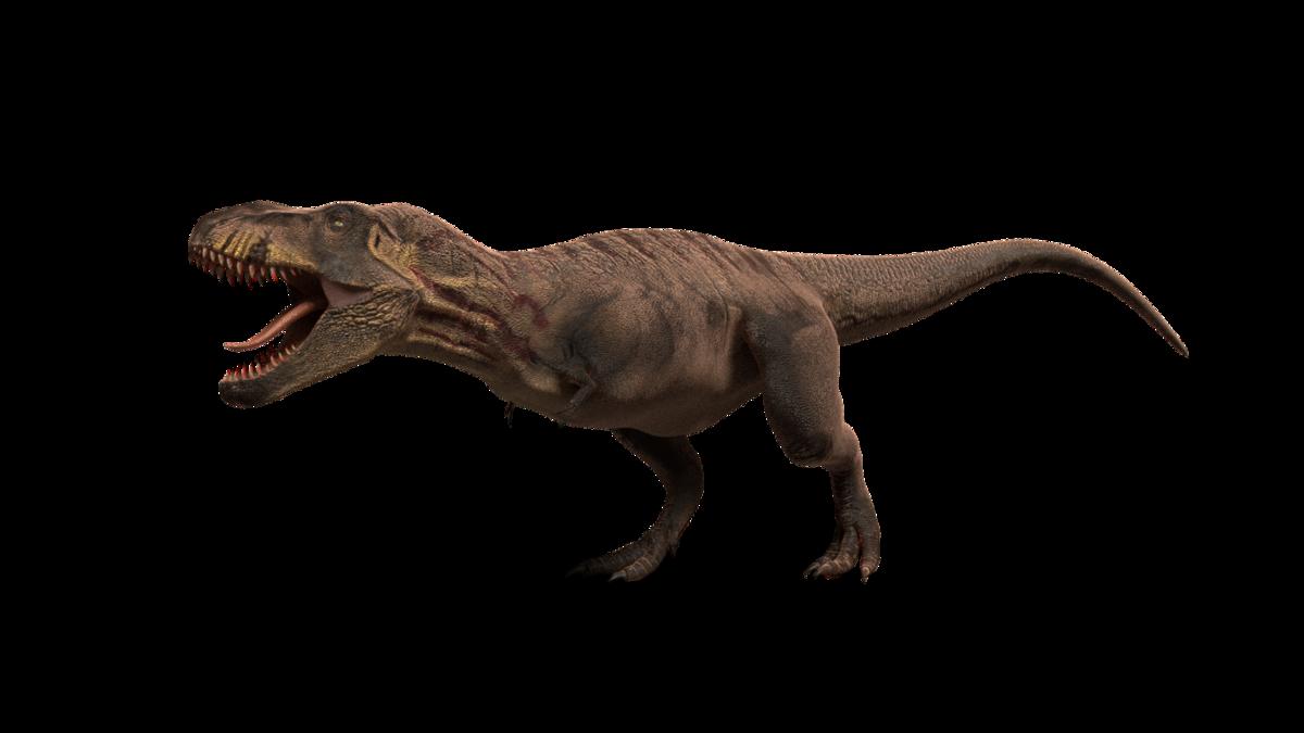 Tyrannosaurus rex model rigged blender markettyrannosaurus rex tyrannosaurus rex model rigged altavistaventures Gallery