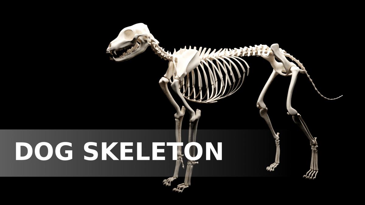 Dog skeleton XMS - Blender MarketDog skeleton XMS - Blender Market