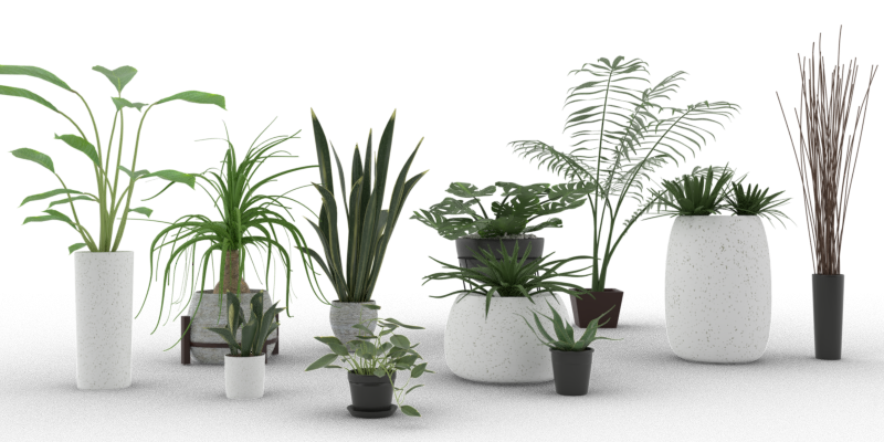 Indoor Plant Pack - Blender Market