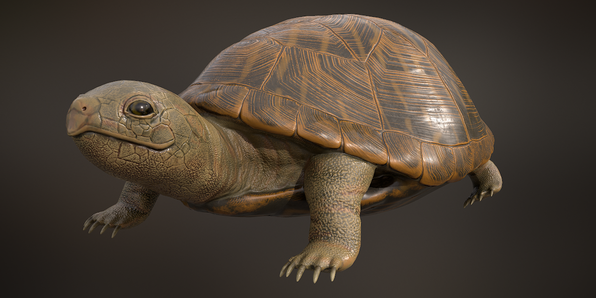 Turtle for CG and VFX
