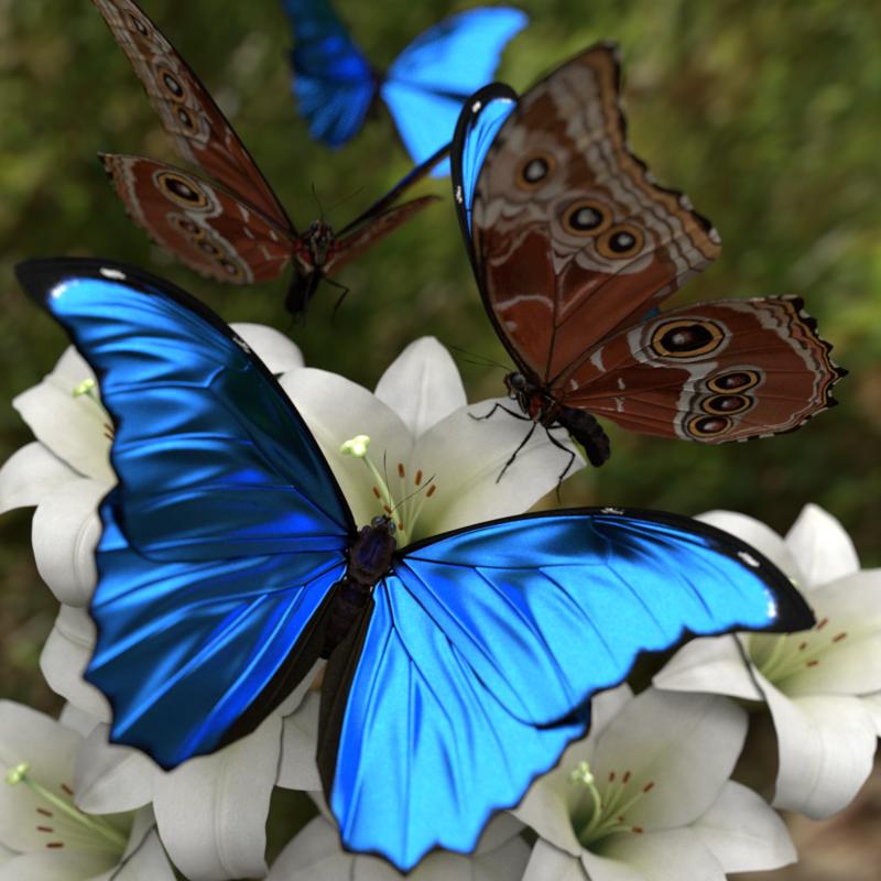 Morpho Menelaus Butterfly Blender Market