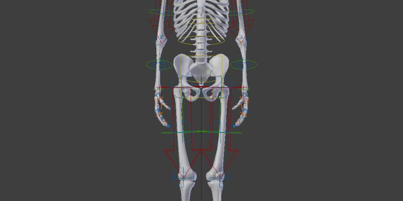 Human Skeleton Rigged