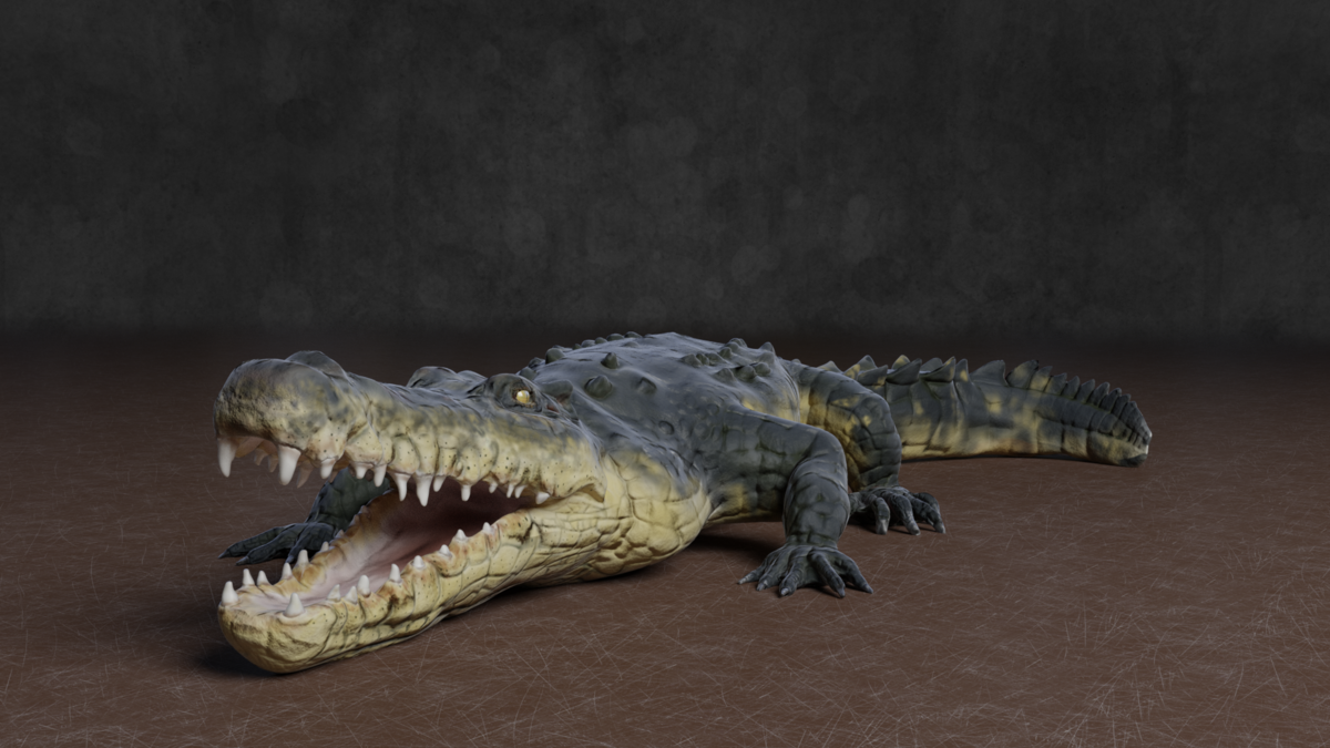 Crocodile - Blender MarketCrocodile - Blender Market